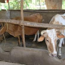 microenterprises and farming
